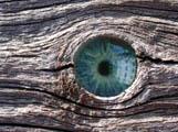 Auge von mir, Baum: © Klicker / PIXELIO